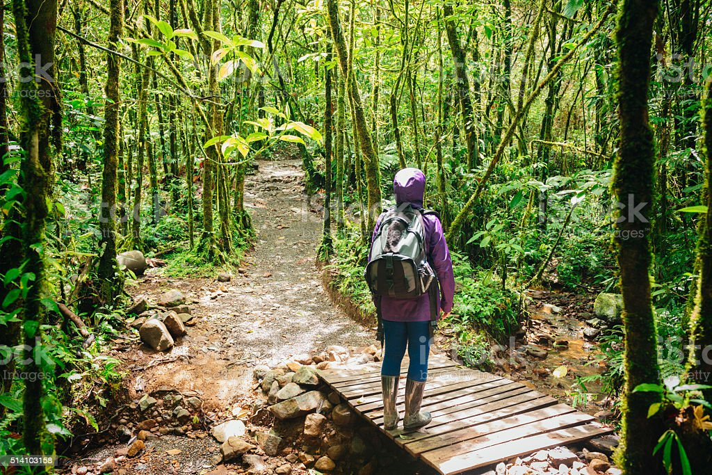 Female Hiker Stops to Look Up Costa Rica Rainforest Trees stock photo