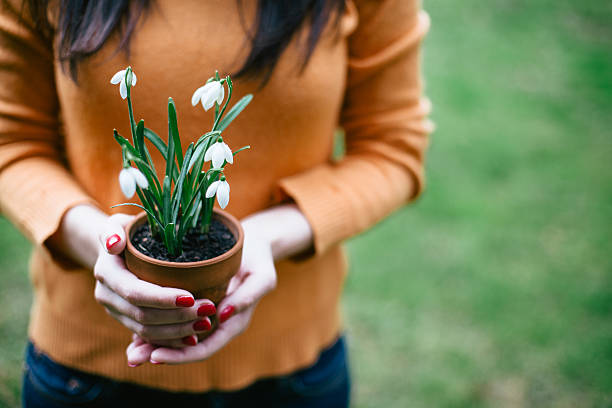 female holding flowerpot with snowdrops - snowdrop stock pictures, royalty-free photos & images
