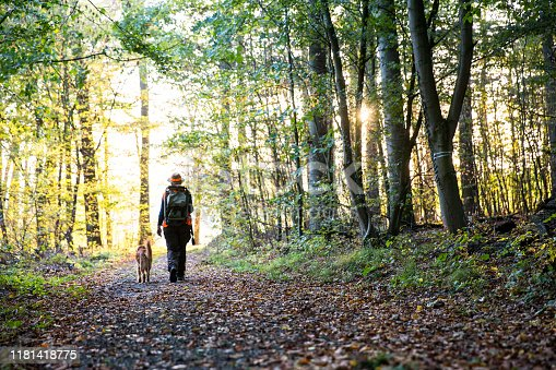 woman, hunter, dog, walking, forest, autumn