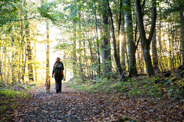 female hunter and her dog walk through forest in autumn stock photo