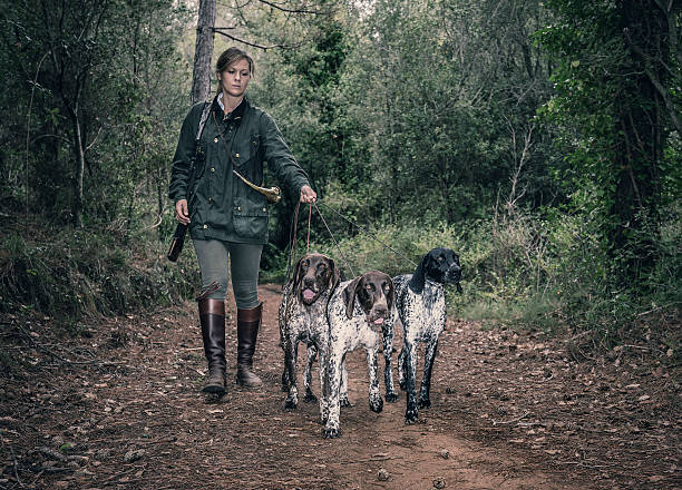 Female Hunter with German shorthaired pointers - foto de stock
