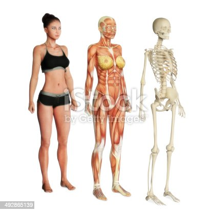 istock Female illustration of body systems 492865139