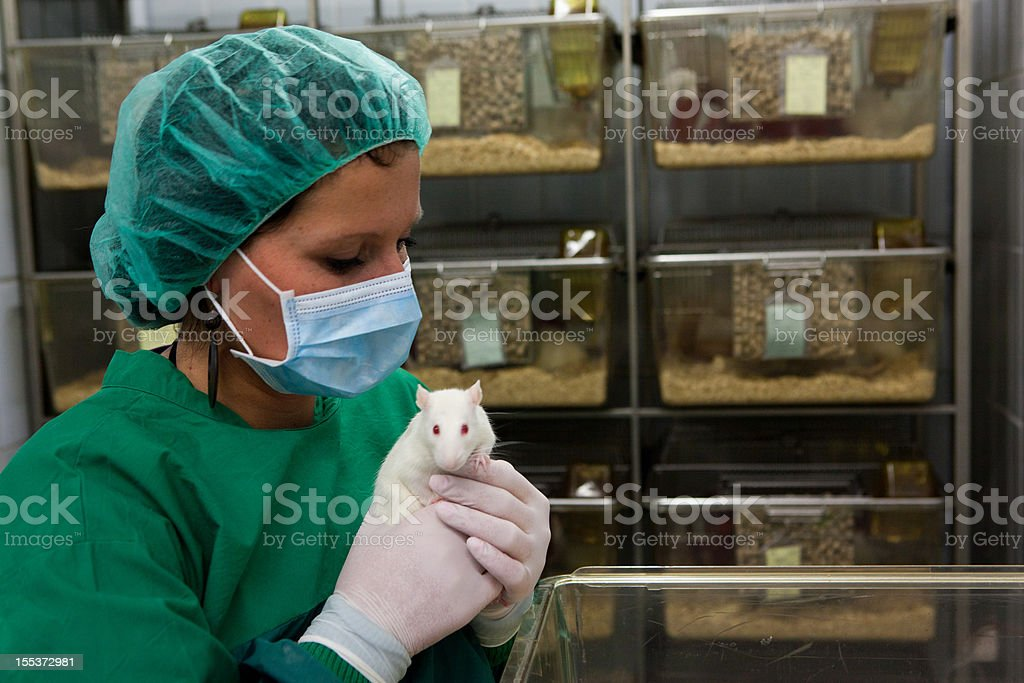 Female lab assistant in scrubs holding a white lab rat stock photo