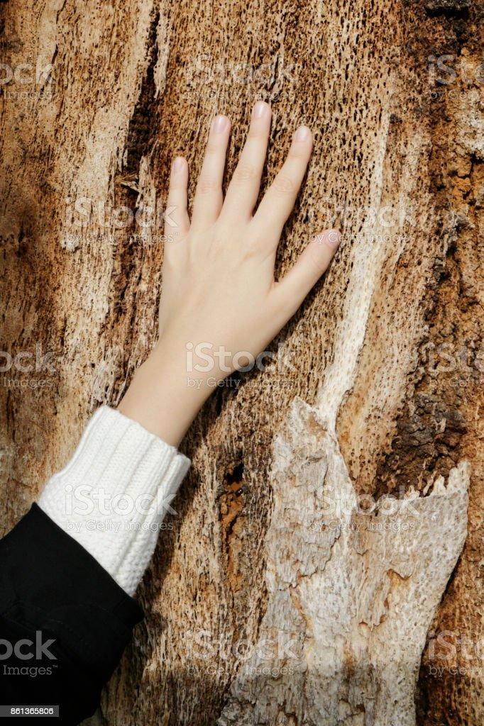 Female left hand on worn wood Bulgarian outdoor girl stock photo