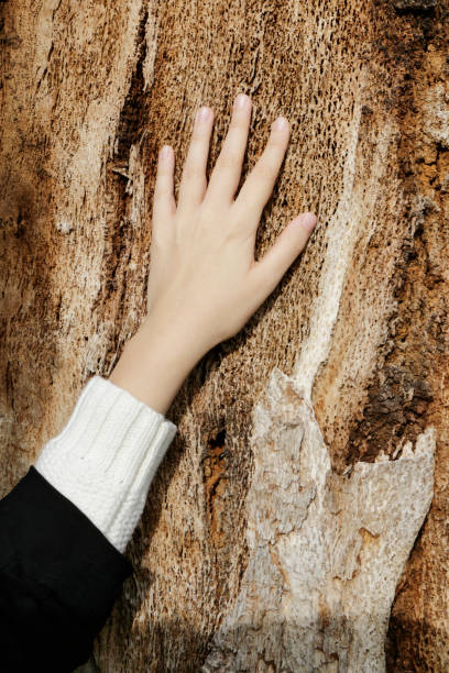 female left hand on worn wood bulgarian outdoor girl - whiteway bulgarian outdoor girl stock photos and pictures