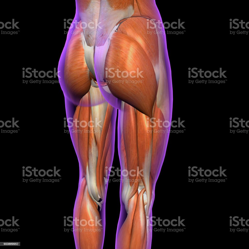 Weibliche Bein Muskeln Posterior Auf Schwarz - Stockfoto | iStock