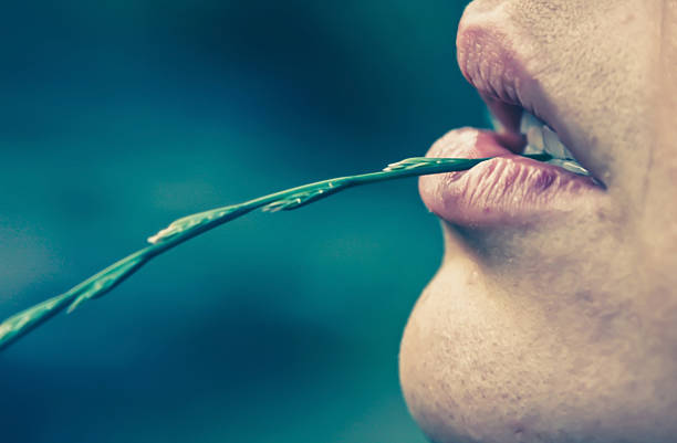 Female lips with a blade of grass stock photo