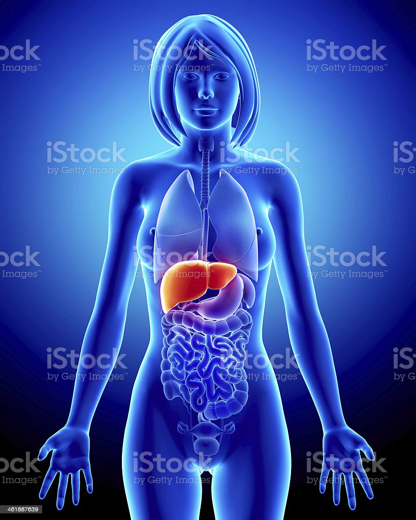 Female Liver Organ Interior View With Full Body Stock Photo More