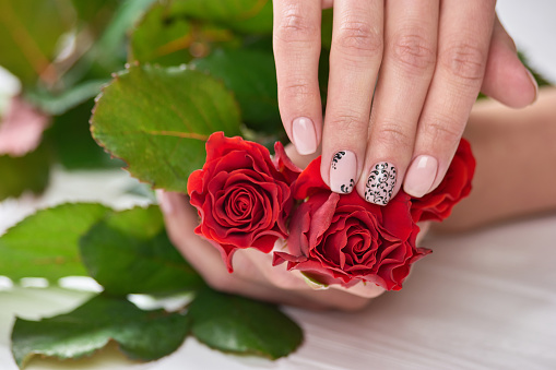 istock Female manicured hands holding roses. 979610038