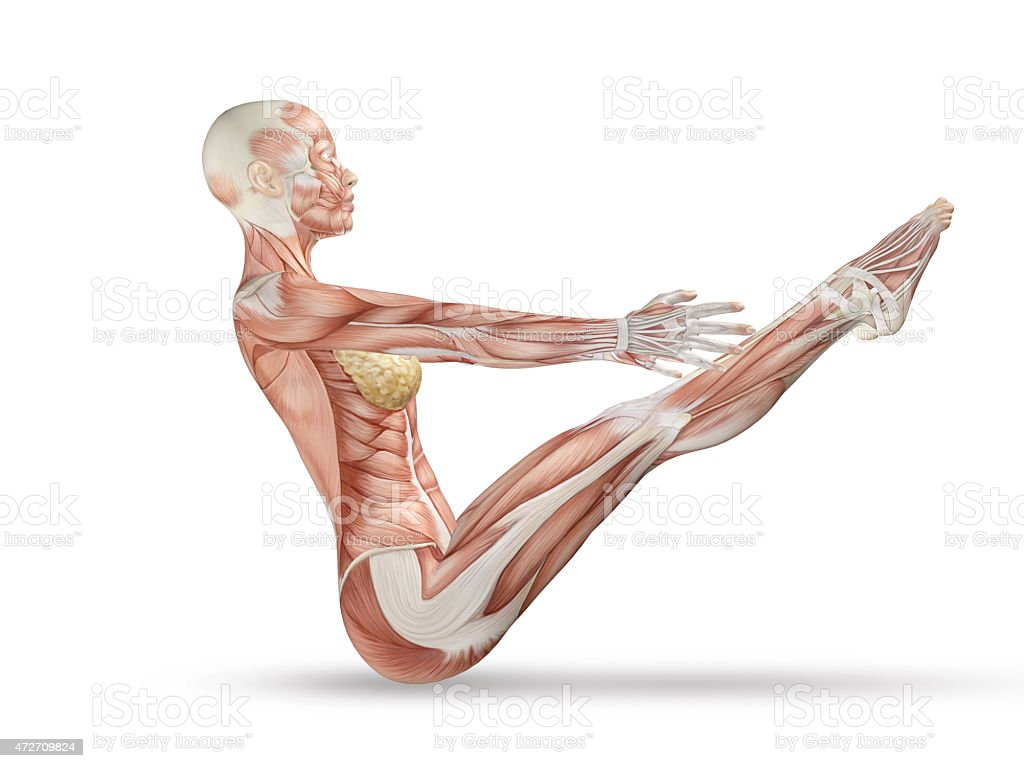 3d Female Medical Figure With Skeleton In Yoga Pose Stock Photo ...