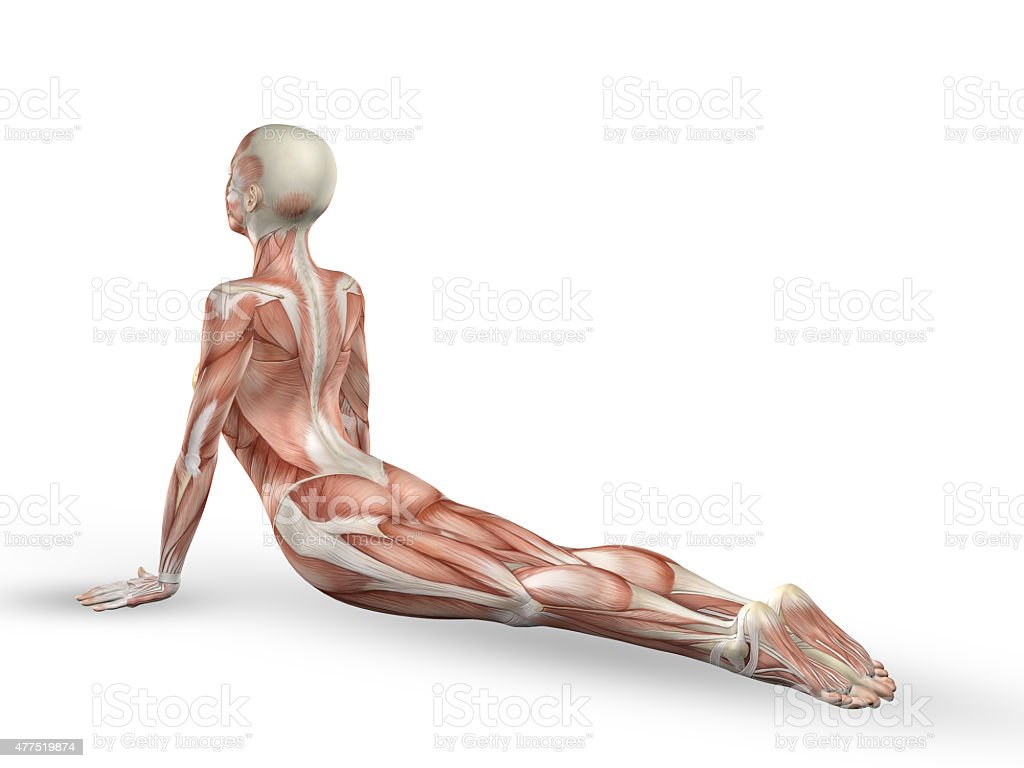 3D female medical figure with spine in yoga position stock photo