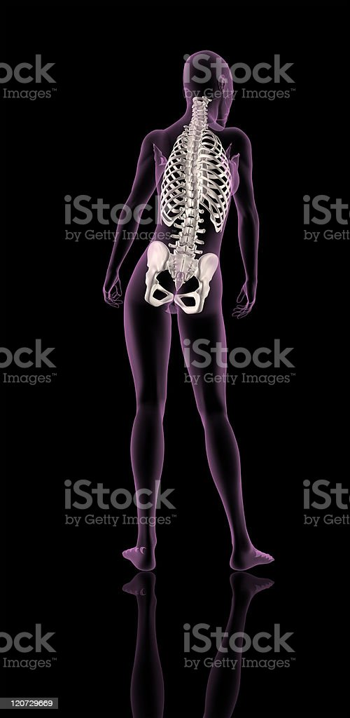 Médico Mostrando Esqueleto Femenino De La Columna Vertebral Y Hueso ...