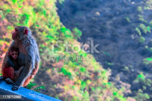Monkey  portrait in Himachal Pradesh In-front of the mountains
