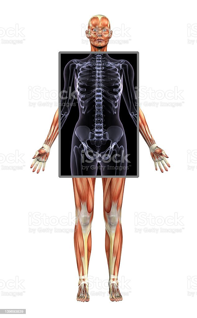 Female Muscle System with X-ray - includes clipping path royalty-free stock photo