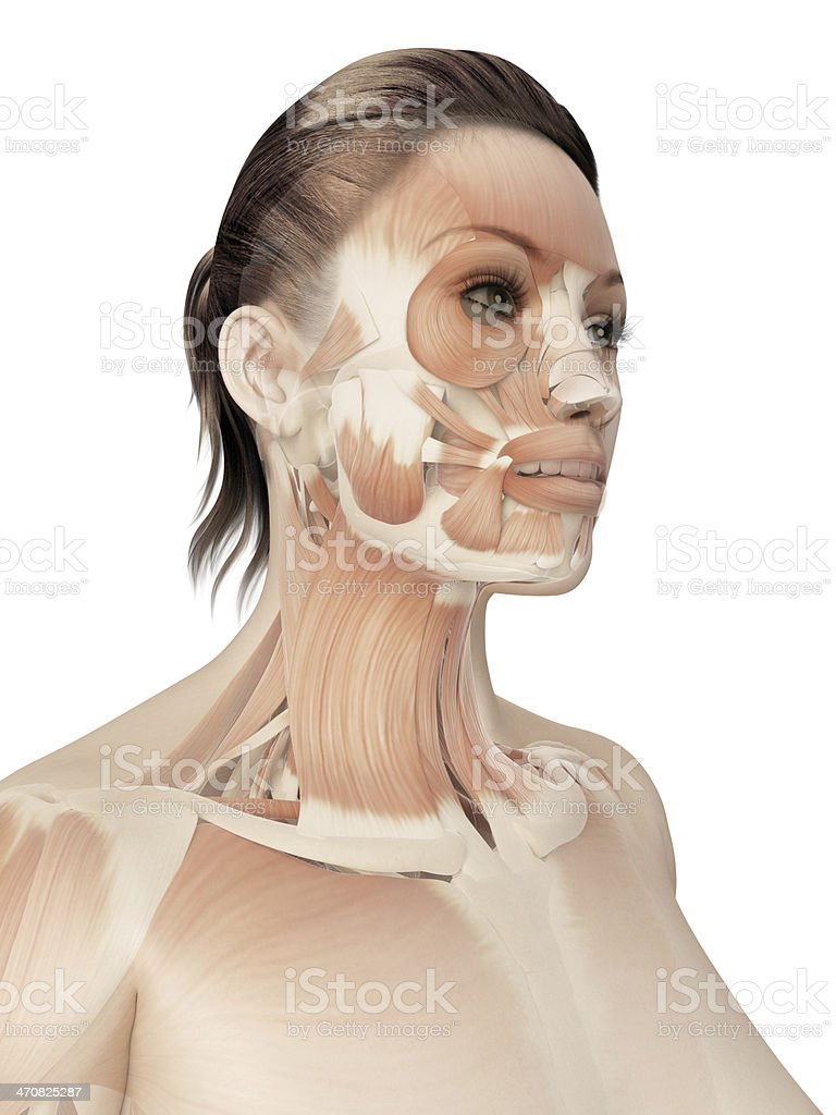 female muscles - head stock photo