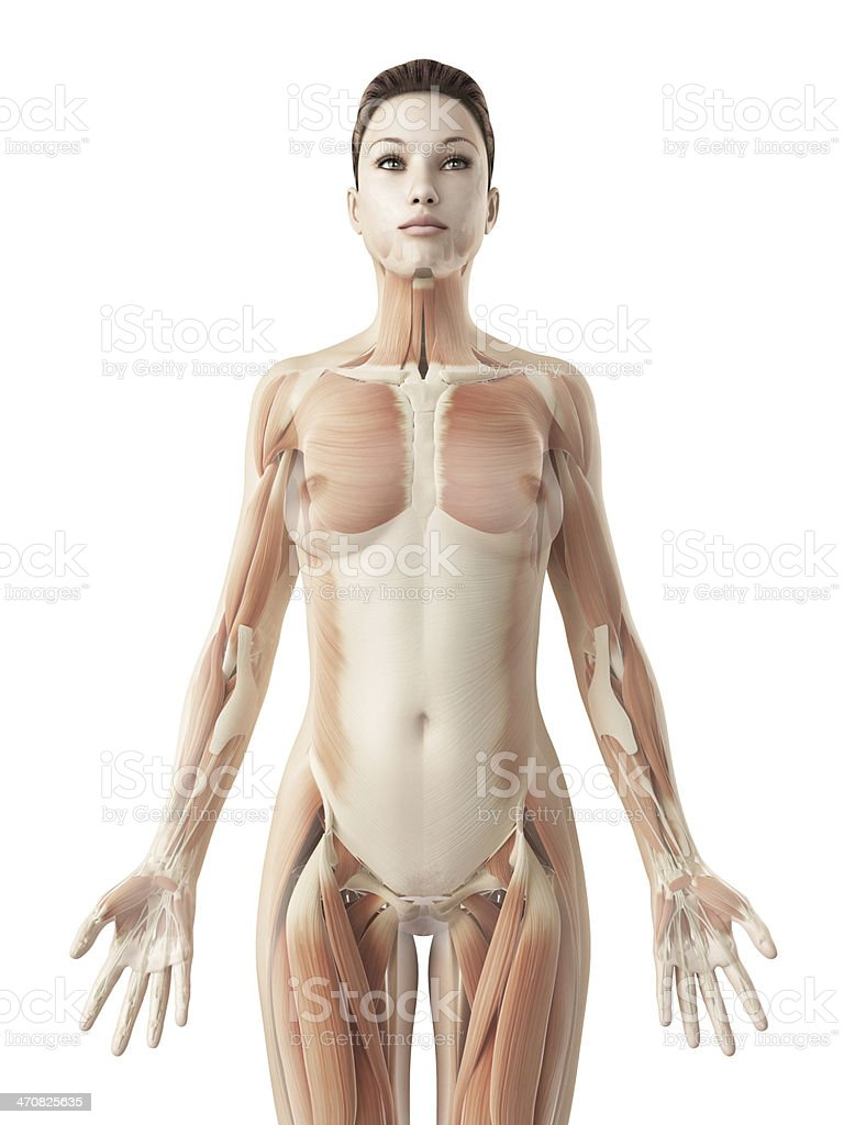 Female Muscles Upper Body Stock Photo More Pictures Of Abdomen