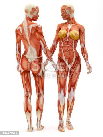 istock Female musculoskeletal system 154455469