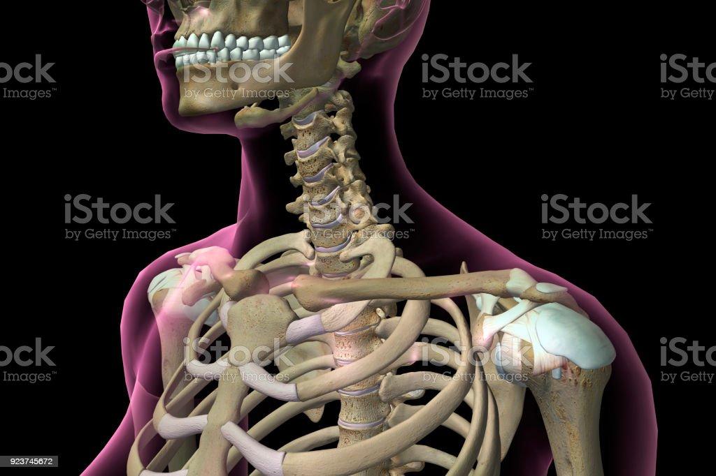 Fotografía de Mujer Cuello Y Huesos Del Hombro y más banco de ...