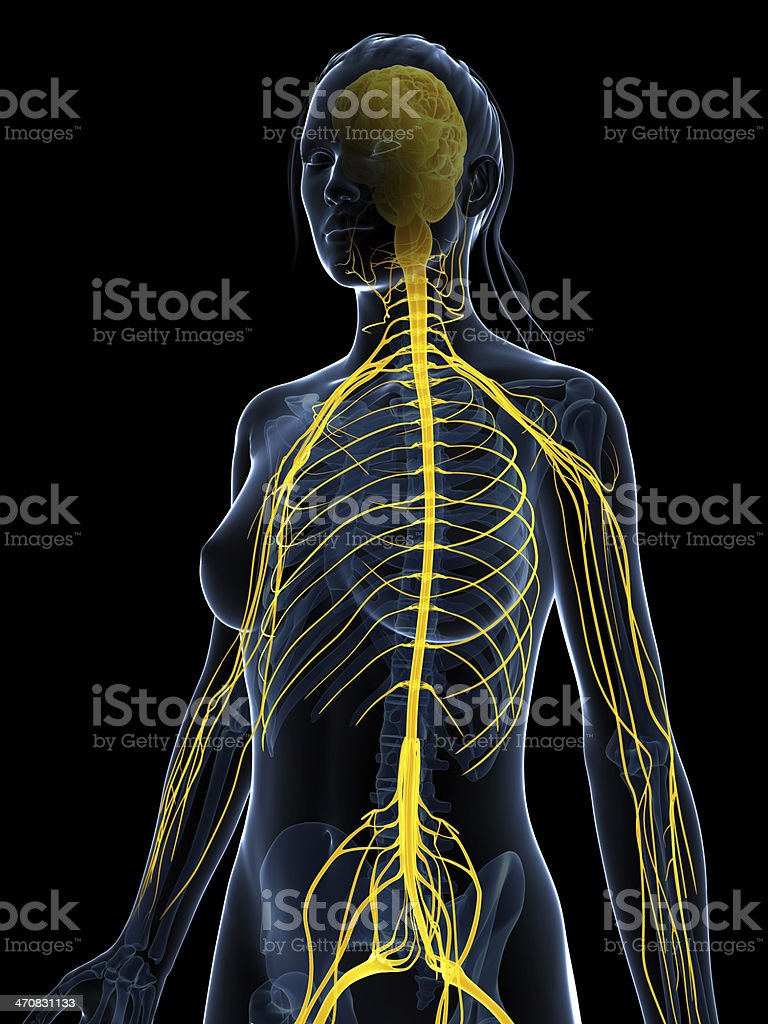 female nerves stock photo