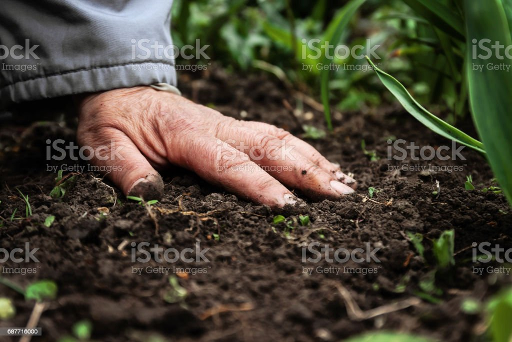 A female old hand on soil-earth. Close-up. Concept of old age-youth, life, health, nature stock photo