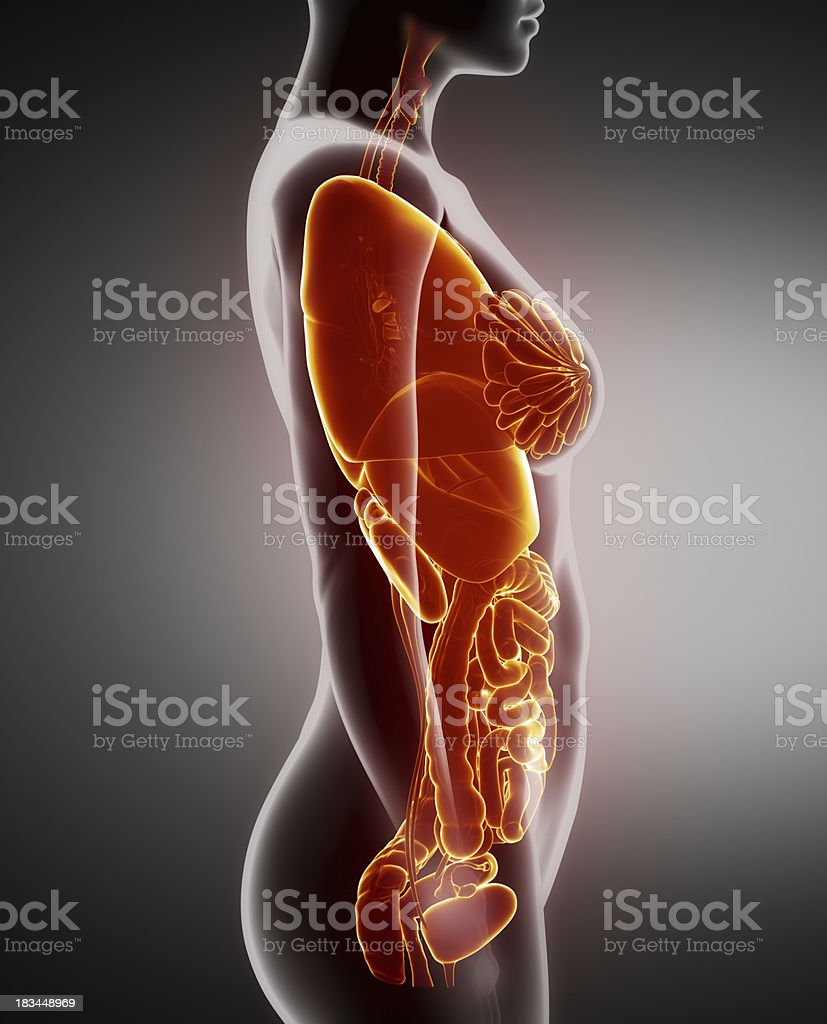 Female Organs Anatomy Xray Left View Stock Photo & More Pictures of ...