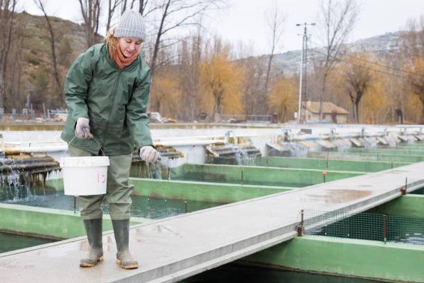 Mujer titular en la granja de esturión, alimentación de los peces - foto de stock
