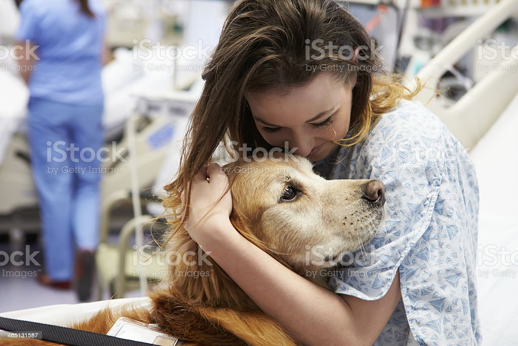 Female patient hugging a therapy Dog in a hospital stock photo