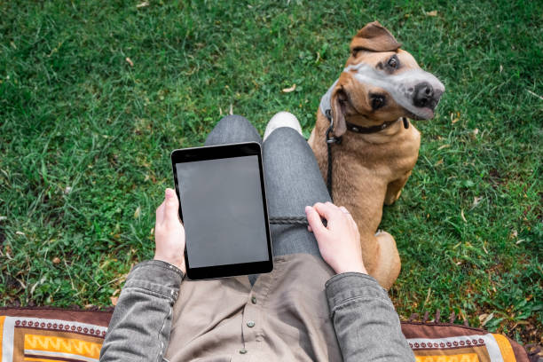 weibliche person internetsurfen im freien im park mit ihrem ausgebildeten staffordshire terrier hund - hundeplätze stock-fotos und bilder