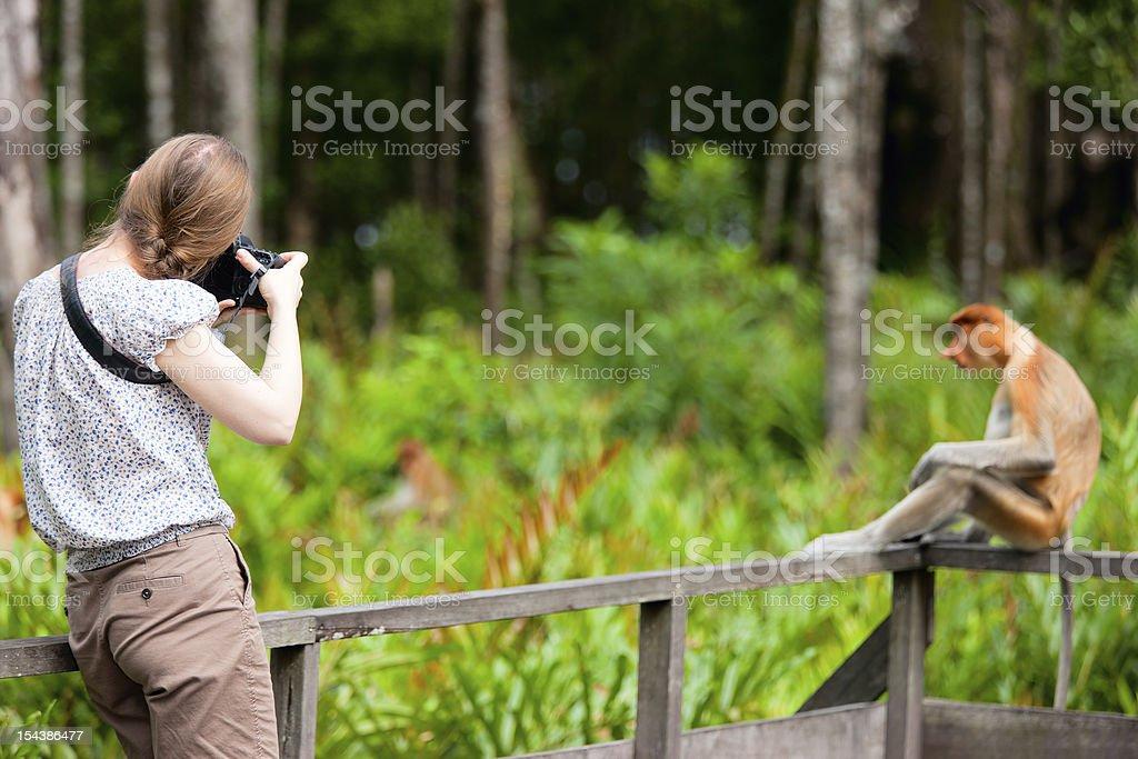 Female photographer and proboscis monkey stock photo