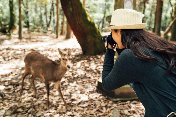 Female photographer taking photo of wildlife picture id1140527304?b=1&k=6&m=1140527304&s=612x612&w=0&h=lmyrwsbx1rj2v hxkiqcmji6xabqmf0c3nkej35 yxo=
