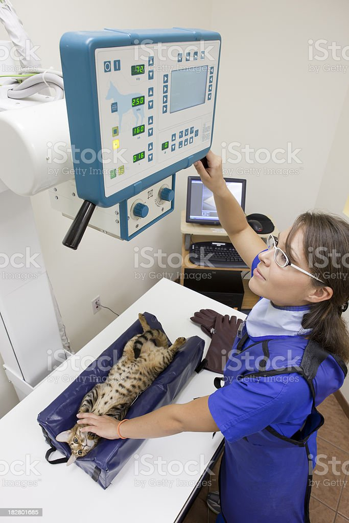 Female Radiologist Prepares System for X-ray of Cat royalty-free stock photo
