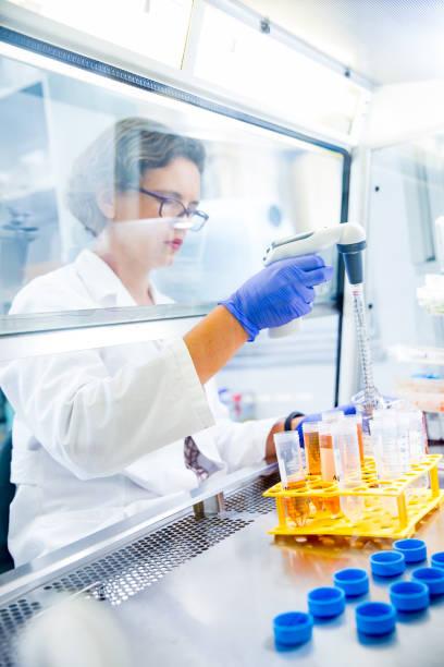 female researcher prepaing tissue cultures in biological safety cabinet - tessuto umano foto e immagini stock