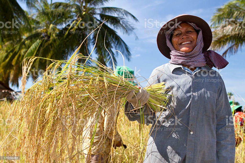 Female rice farmer posing with plants A manual worker is holding a crop if rice paddy in her hand and smiling (Cambodia). Agricultural Field Stock Photo