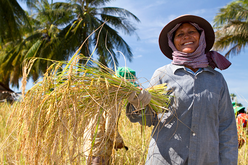 Female Rice Farmer Posing With Plants Stock Photo - Download Image Now