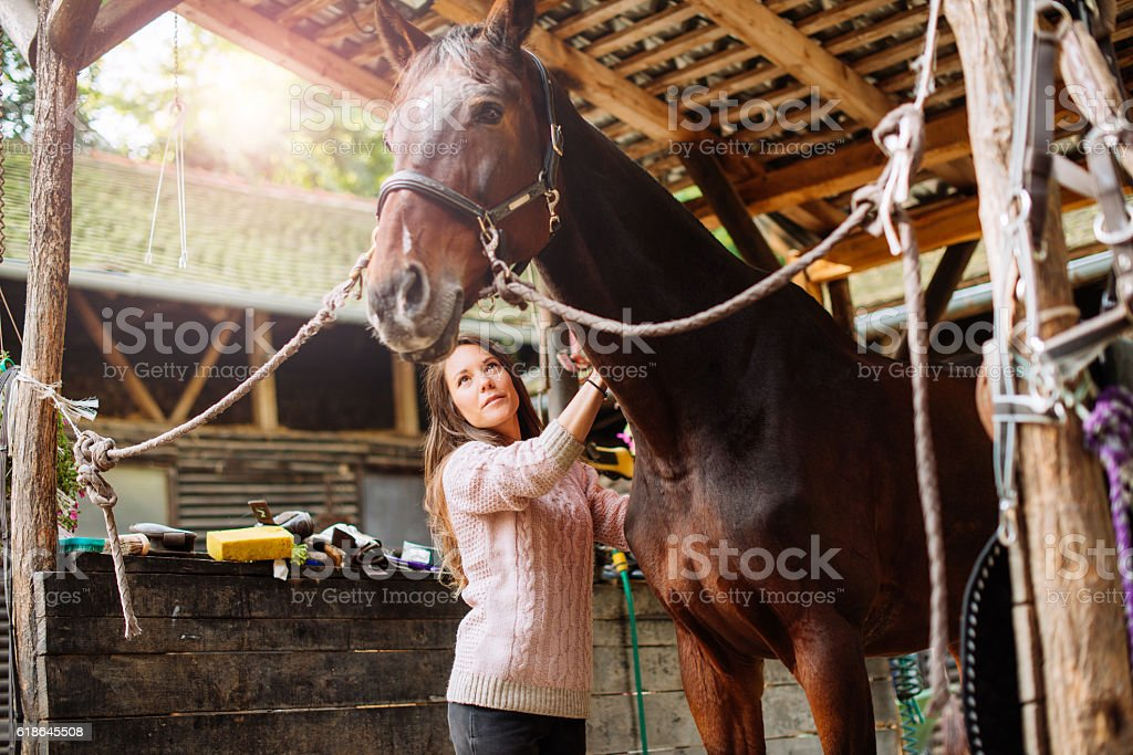 Female rider brushing her mare before the dressage stock photo