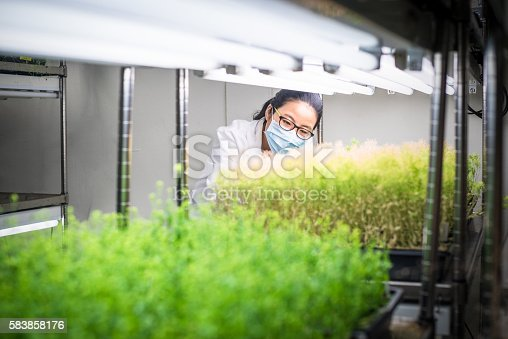istock Female scientist examine transgenic plants in the growth chamber 583858176