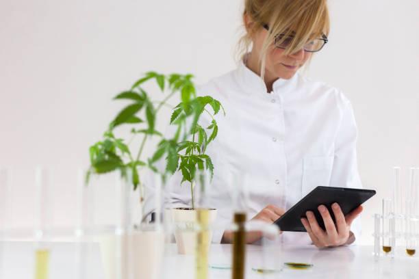 kvinnliga vetenskaps man i laboratoriet ester cbd olja utvinns ur en marijuana växt. spara anteckningar och resultat på en surfplatta. hälso-apotek från medicinsk cannabis. - carpel bildbanksfoton och bilder