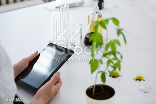 istock Female scientist in laboratory testing cbd oil extracted from a marijuana plant. She is using a various glass tubes and bowls for the experiment. Saving notes and results on a tablet. 1151221630