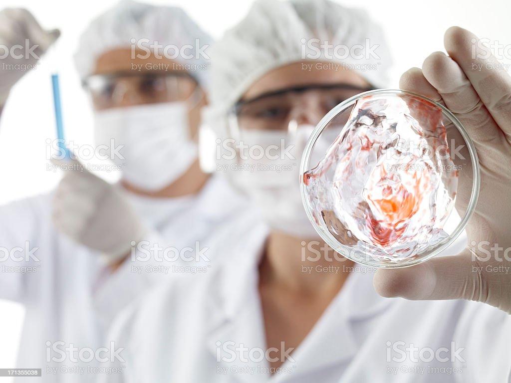 Female Scientist Looking Petri Dish royalty-free stock photo