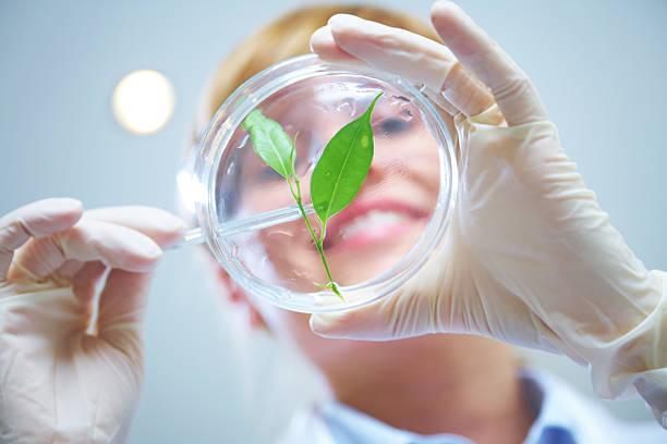biotecnologia - vida de estudante - fotografias e filmes do acervo