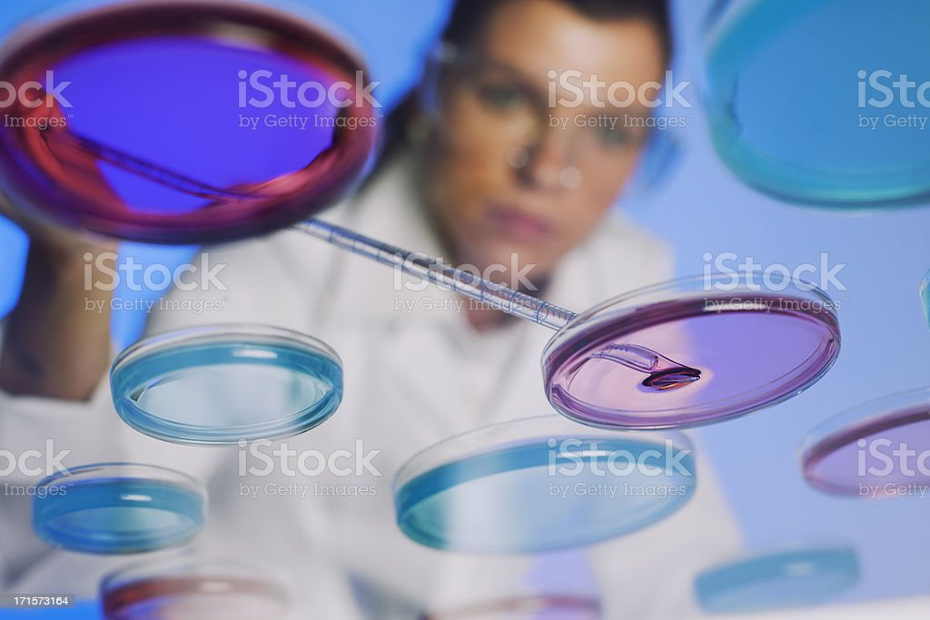 Female Scientist working with petri dishes royalty-free stock photo