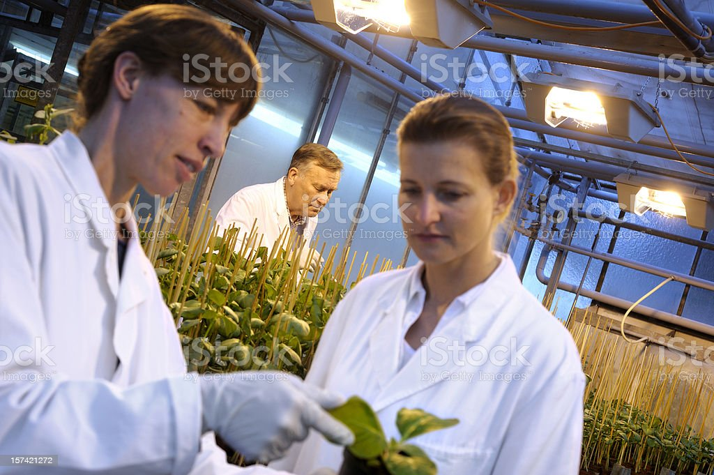 Female scientists at work on green plants stock photo