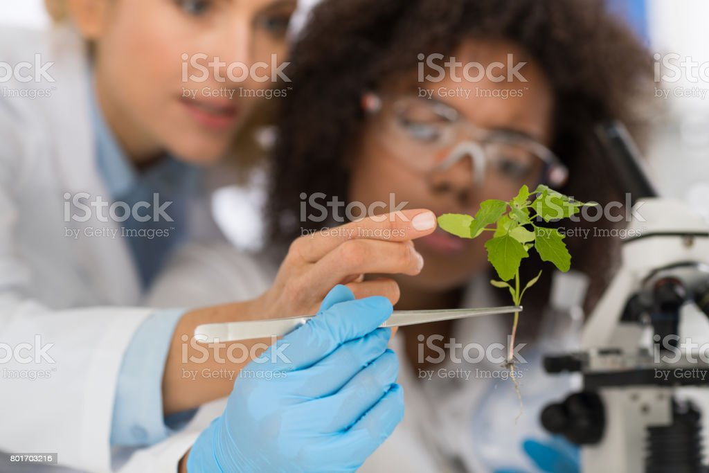 Female Scientists Examine Plant Working In Genetics Laboratory Study Research, Two Women Analyze Scientific Experiments stock photo