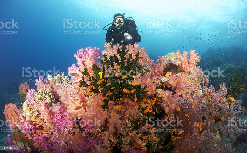 Female Scuba Diver over reef stock photo
