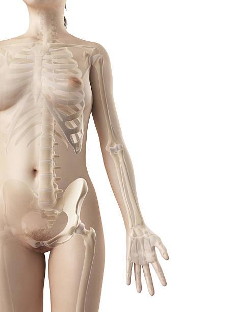 female skeleton - arm stock photo