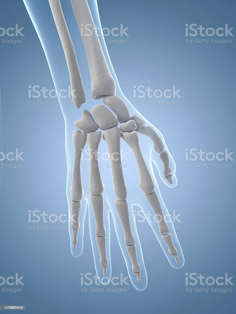 Female Skeleton Hand Stock Photo More Pictures Of Anatomy Istock