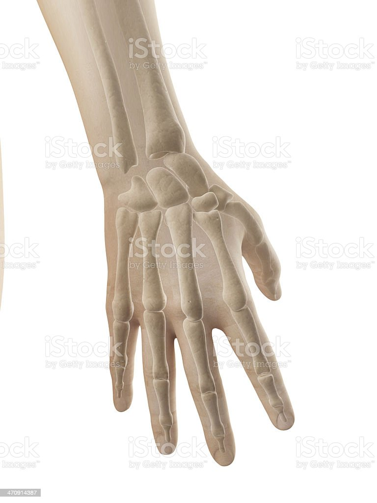 Female Skeleton Hand Stock Photo More Pictures Of Anatomy Istock