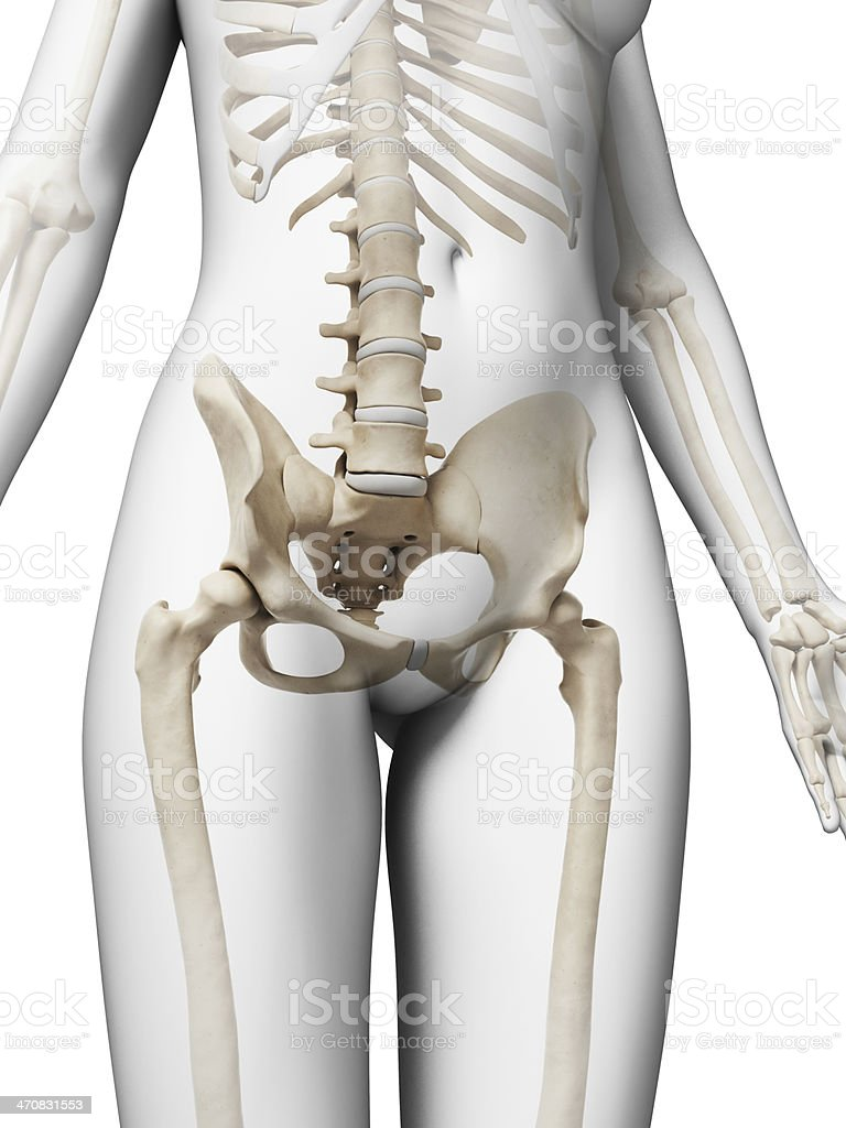 Spine And Hip Anatomy Choice Image - human body anatomy