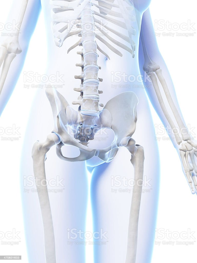 female skeleton - hip and spine stock photo