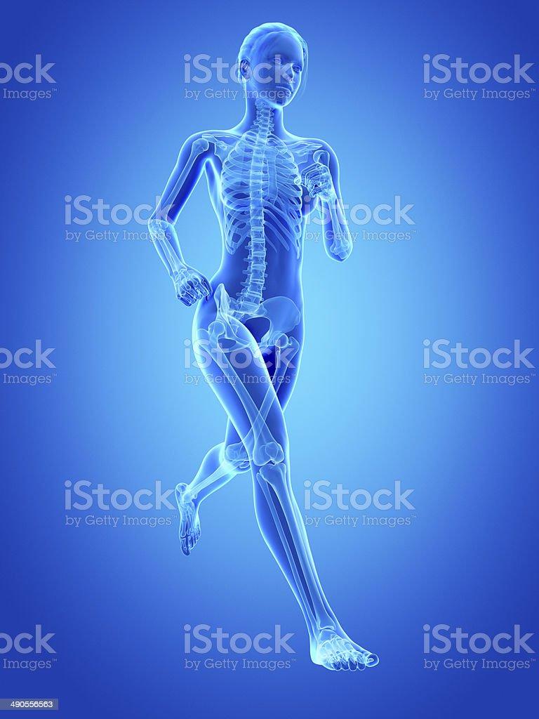 female skeleton stock photo
